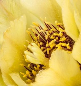 Cactus_Flowers-2-8