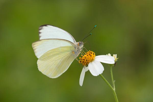 Butterfly -- © Bruce Taubert