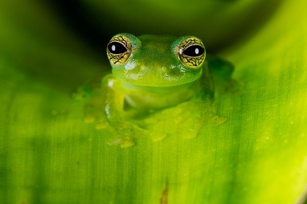Glass Frog Blog jpeg 2