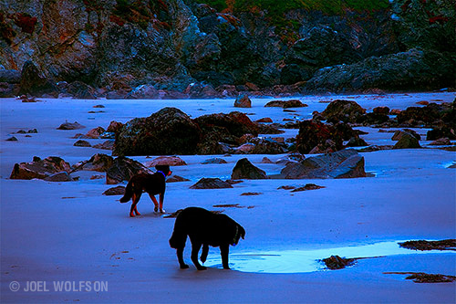 Low Tide Dogs