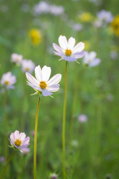 08_13 Flag wildflowers-7626