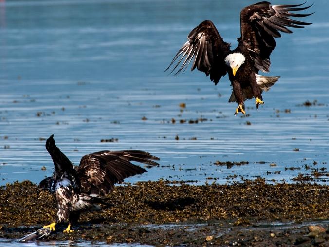 Eagle 19