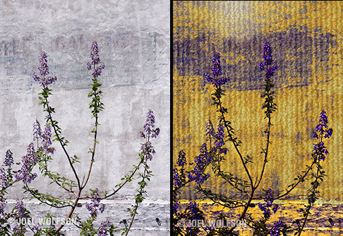 "Here's a before (left) and after (right). I started in Topaz ReStyle. In ReStyle you can choose your color palette so I used it to get vivid purple and yellow. Then I hopped into Texture Effects and used a Texture layer to create the corrugated metal look for the wall and a Light Leak layer to make it look like a spot of sun is reflected on the wall. I used the masking (available in each layer) to isolate the ""sun"" reflection. In the end I used only two layers plus a Basic Adjustment layer and a few minutes of my time to make this image."