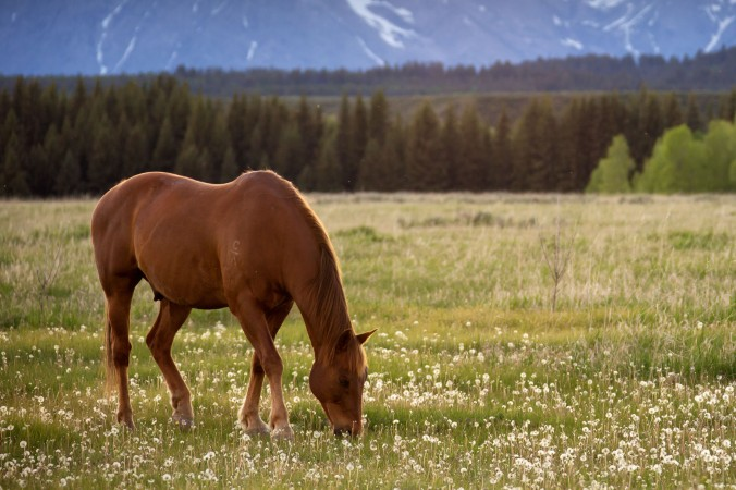 There on the tips of fair fresh flowers feedeth he How joyous is his neigh There in the midst of sacred pollen hidden all hidden he How joyous is his neigh -Navajo Song