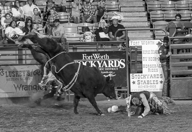 Bulls 1: Cowboys 0: Action happens very quick and very close to the chutes. 8 seconds ride seems like a lifetime