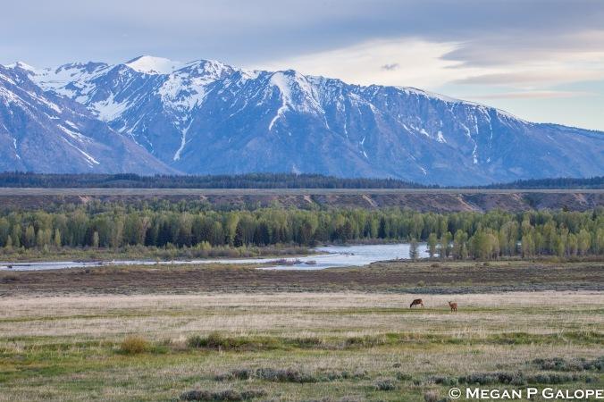 elk-landscape