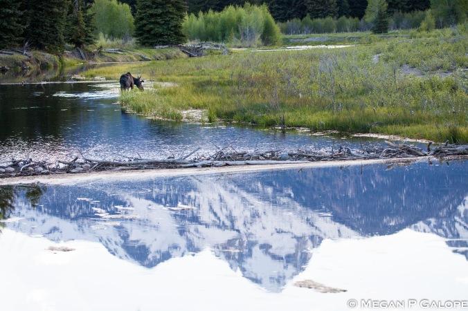 moose-landscape