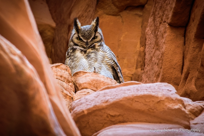 owl-0212-blog-post