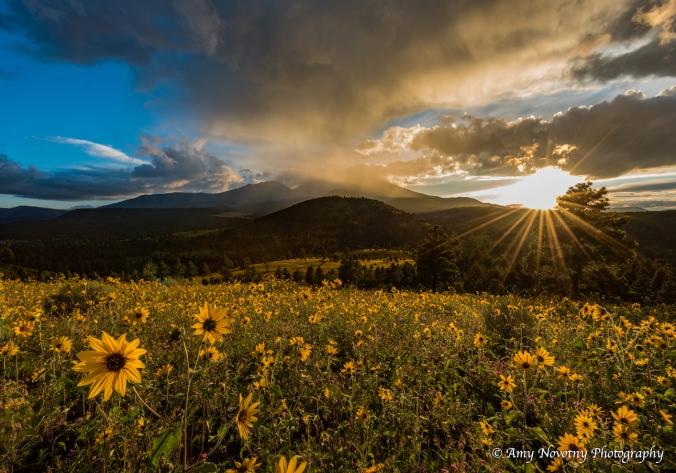 sunflowers-5241-blog-post